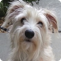 Adopt A Pet :: Bullet - Orlando, FL