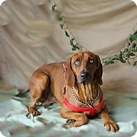 Adopt A Pet :: Bones - Folsom, LA