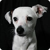 Adopt A Pet :: Iggy - Lufkin, TX