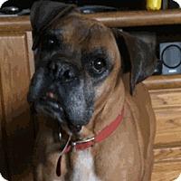 Adopt A Pet :: Treason - Reno, NV