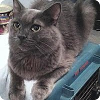 Adopt A Pet :: Grayce - Medford, NJ