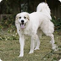 Adopt A Pet :: Beau  *Adopted - Tulsa, OK