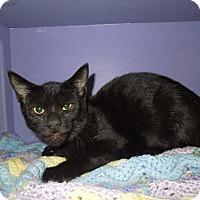 Adopt A Pet :: Evie - Medina, OH