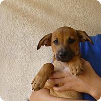 Adopt A Pet :: Prada - Oviedo, FL