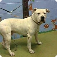 Adopt A Pet :: Roland - A458107 is IN DANGER  at Moreno Valley - Beverly Hills, CA