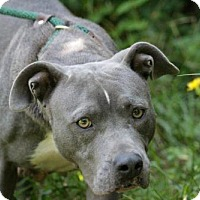 Adopt A Pet :: Sheila - Richmond, VA
