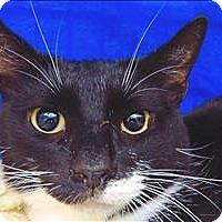 Adopt A Pet :: Marty - Sherwood, OR