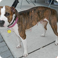 Adopt A Pet :: Ginger - Umatilla, FL