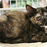 Adopt A Pet :: Dahlia - Cumberland and Baltimore, MD