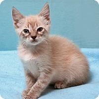 Adopt A Pet :: Carol - Tucson, AZ