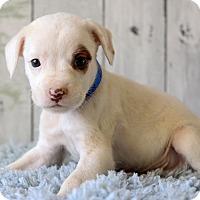 Adopt A Pet :: McCoy - Waldorf, MD