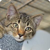 Adopt A Pet :: Theo - Smithtown, NY