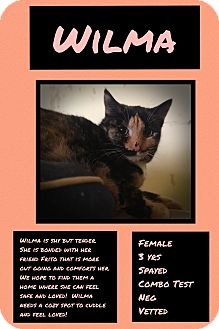 Calico Cat for adoption in CLEVELAND, Ohio - Wilma