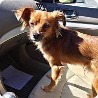 Adopt A Pet :: PAULI - PARSIPPANY, NJ