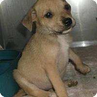 Adopt A Pet :: Jetta - Orangeburg, SC