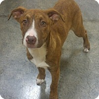 Adopt A Pet :: Moe available 12/10 - Sparta, NJ