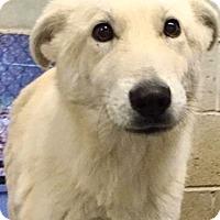 Adopt A Pet :: Sno - Oswego, IL