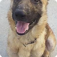 Adopt A Pet :: SARA-17 Pembrook Pines Fl - Lithia, FL