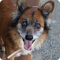 Adopt A Pet :: CAROLINE - Los Angeles, CA