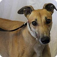 Adopt A Pet :: KL's Nellie - Carol Stream, IL