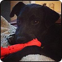 Adopt A Pet :: Della - Wakefield, RI