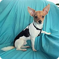 Adopt A Pet :: Pablo - Mooy, AL