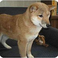 Adopt A Pet :: Kita - Antioch, IL
