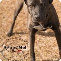 Adopt A Pet :: Nyla - Crawfordville, FL