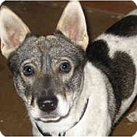 Adopt A Pet :: Wily - Scottsdale, AZ