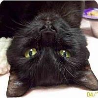 Adopt A Pet :: Tallulah - Annapolis, MD