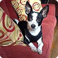 Adopt A Pet :: Hermey aka Paco - Shirley, NY