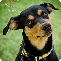 Adopt A Pet :: TIMMY (Tiny) - Phoenix, AZ