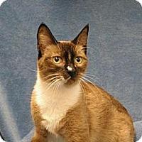 Adopt A Pet :: Picchu - Sacramento, CA