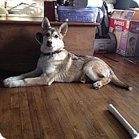 Adopt A Pet :: Kira - Egremont, AB