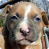 Adopt A Pet :: Baby Blake - Oakley, CA