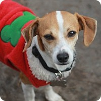 Adopt A Pet :: Holly-apt.size!MEET HER - Norwalk, CT
