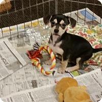 Adopt A Pet :: Little Girl - Pomerene, AZ