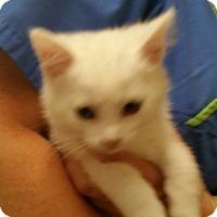Adopt A Pet :: Alaska - Troy, OH
