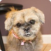 Adopt A Pet :: Chewy - Seneca, SC
