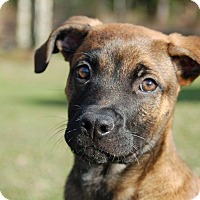 Adopt A Pet :: Fritz - Ormond Beach, FL