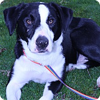 Adopt A Pet :: Rudy - Grants Pass, OR
