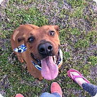 Adopt A Pet :: Banjo Paterson - Jersey City, NJ