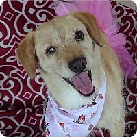 Adopt A Pet :: Reba - Canoga Park, CA