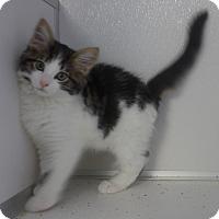 Adopt A Pet :: Timmy - Manning, SC