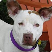 Adopt A Pet :: Pink - Cleveland, OH