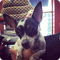 Adopt A Pet :: Bunny - Manassas, VA