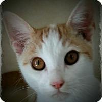 Adopt A Pet :: Pelton - Pueblo West, CO