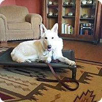 German Shepherd Dog Mix Dog for adoption in Livermore, California - Kyzer