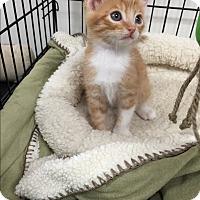 Adopt A Pet :: Pumpkin - Tehachapi, CA