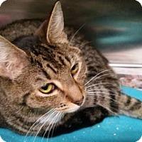 Adopt A Pet :: Piper - Lowell, MA